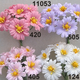 Summer aster small