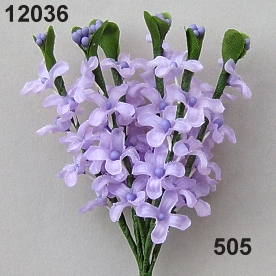 Lilac blossom panicl.x7